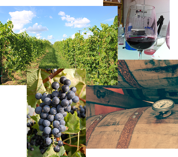 collage of DWB items, leafed out grape vine, bourbon aging, plump grapes, glass of wine
